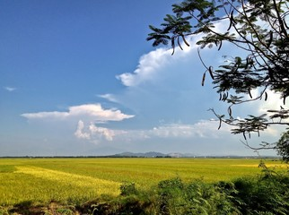 Agricultural Farm Land with blue skies and clouds, Hue, Vietnam
