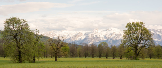 Bergblick und Bäume