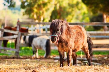 a pony is doing pee