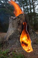 Burning tree stump