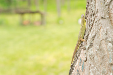 Green lizard on the trunk of a tree