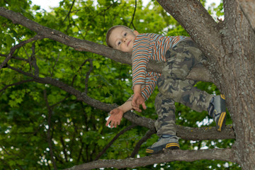 Little boy climbing in a tree