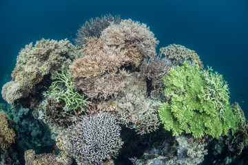 Tropical Pacific Coral Reef 4