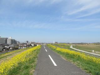 菜の花に囲まれた道