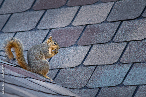 Foto op Canvas Eekhoorn Cute squirrel sitting on the roof