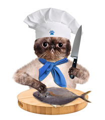 Cat shef.
