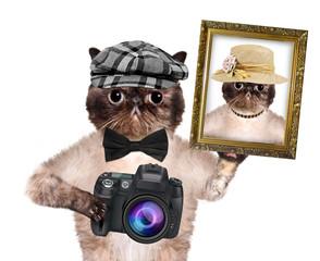 photographer cat