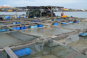 Fish Rearing Farm At  Coastal Area