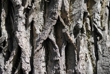 bark tree