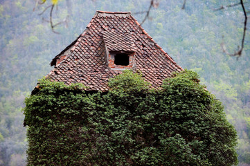 Overgrown ivy on abandoned house