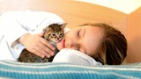 girl with striped kitten meows lie on the bed poster