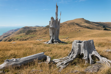 deforested slopes at Banks Peninsula, New  Zealand
