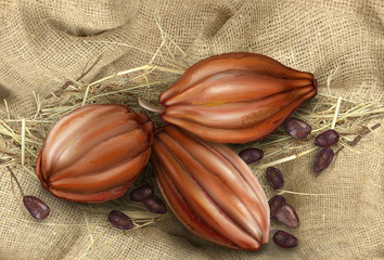 cocoa fruit on a background of old tissue