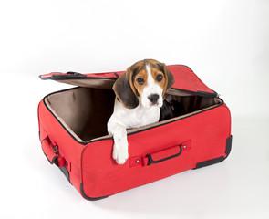 valigia con cane