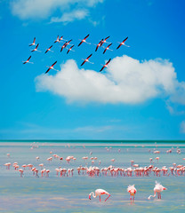 flamingos' flock
