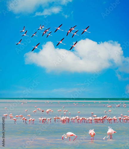 Fotobehang Flamingo flamingos' flock