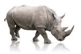 Rhino isolated