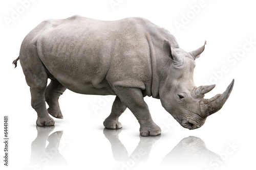 Foto op Canvas Neushoorn Rhino isolated