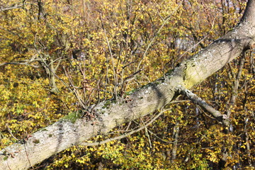 Baumstamm im Herbst