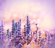 Floraison belles fleurs de prairie violet