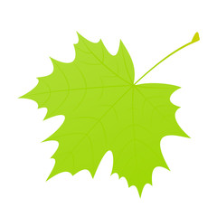Green maple leaf.