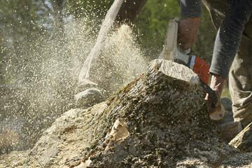 Man cuts a fallen tree.