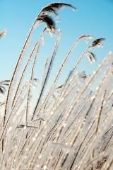 Naturschönheit im Winter