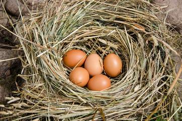 small chicken eggs in nest of hay outdoor