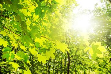 Frühlingssonne in Wald :)