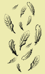 Illustration of hand drawn feathers on beige background