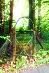 Tor im Wald