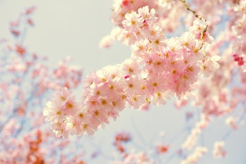 verträumter Frühling....