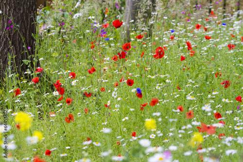 In de dag Poppy Wildflower meadow