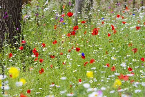 Deurstickers Poppy Wildflower meadow