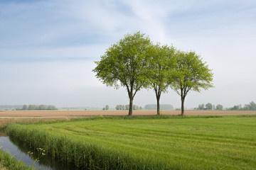 Lawn landscape with three trees