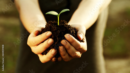 Fotobehang Planten Female hand holding a young plant