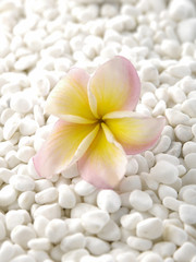Pile of white stones with frangipani