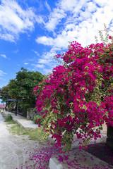 Streets of Samosir Island.