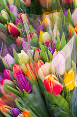 Wrapped bouquets of tulips in various colors.