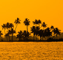 silhouette of coconut palm trees at golden tropic sunset, Kerala