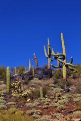 Rocking Saguaro