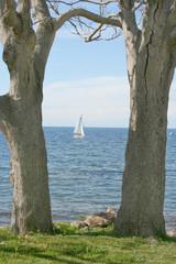 Scorcio paesaggio mare e alberi