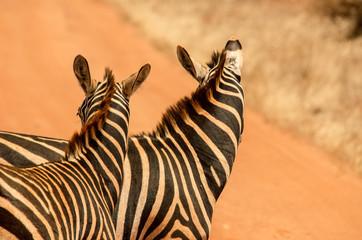 Zebre vicine
