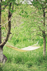 Hammock in green garden. spring