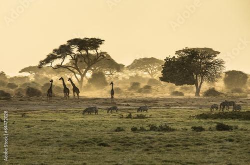 Plagát, Obraz Silhouette di giraffe