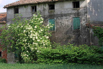 abandoned country house with the uncultivated garden