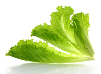 Lettuce salad isolated on a white background