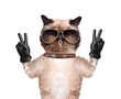 cat with peace fingers in black leather gloves