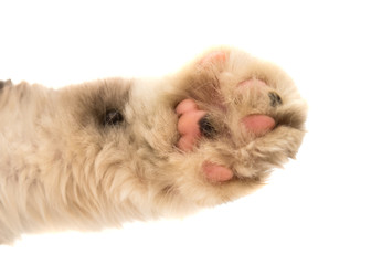 Detail of a cat paw