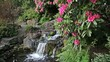 Waterfall in Garden with Rhododendron Flowers Blooming in Spring